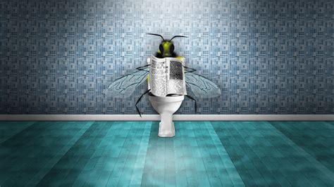 flies in the toilet reading the newspaper wallpaper 1920x1080 hd resolution wallpaper