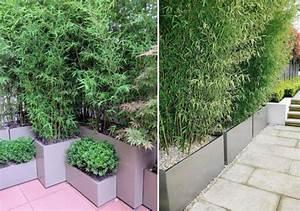 Gräser Kübel Terrasse : bambus im k bel als sichtschutz und deko auf der terrasse ~ Markanthonyermac.com Haus und Dekorationen