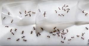 Hilft Mehl Gegen Ameisen : ameisen bek mpfen im haus und im garten hausmittel gegen ameisen ~ Whattoseeinmadrid.com Haus und Dekorationen