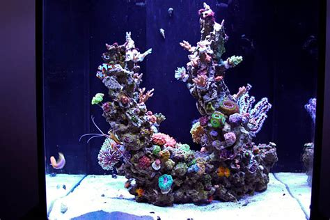 Tips For Awesome Aquascapes  Saltwater Aquarium Advice