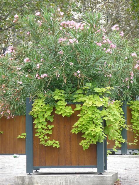 laurier c 244 t 233 jardin