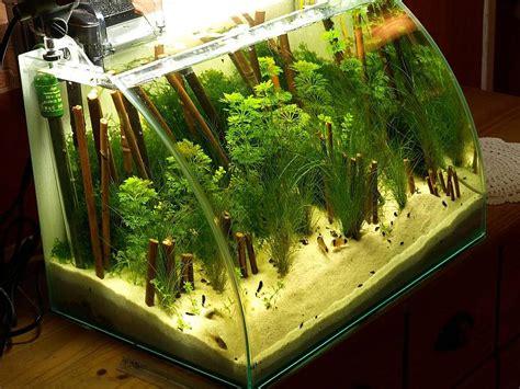 40 liter wei 223 er strand seite 2 aquarium forum