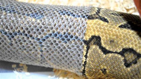 python shedding signs python shedding