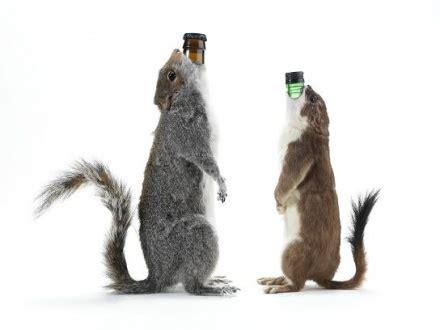 Sink The Bismarck Squirrel by Becks Timely Brew News