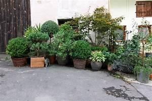 Immergrüner Sichtschutz Im Kübel : pflanzen sichtschutz terrasse k bel genial balkon sichtschutz ~ Whattoseeinmadrid.com Haus und Dekorationen