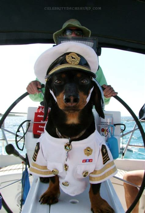 Dog Boat Captain by Crusoe S Sailing Trip Part 3 Captain Crusoe Sharkwiener