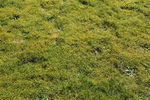 Wann Mäht Man Rasen : wann den rasen vertikutieren und d ngen das gartenmagazin ~ Markanthonyermac.com Haus und Dekorationen