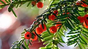 Garten Blumen Pflanzen : giftige pflanzen giftige blumen im eigenen garten ~ Markanthonyermac.com Haus und Dekorationen