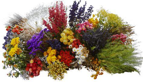 offre une fleur ou un bouquet 224 ceux que tu aimes page 35 l aspirateur en folie forum