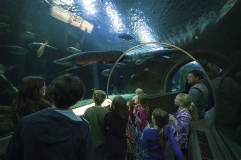 fish aquarium minneapolis skyline aquarium middle c joe curry 2017 fish tank maintenance