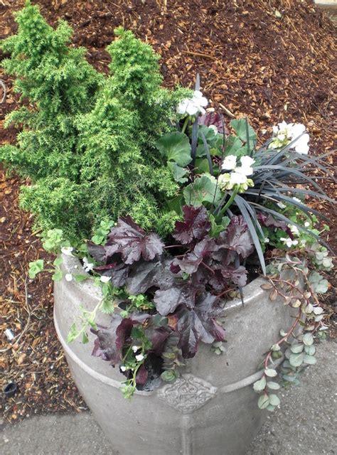 jardin hiver plantes accueil design et mobilier