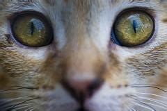 are cats color blind are cats color blind like dogs and do they only see black