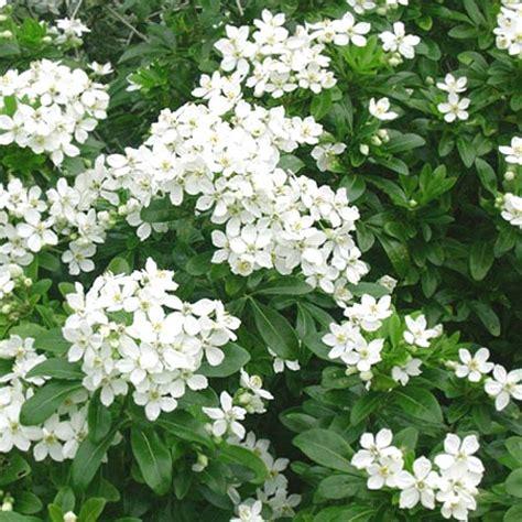 arbustes 224 feuillage persistant jardinerie riera