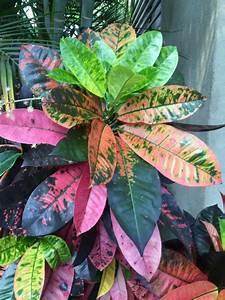 Zimmerpflanze Lange Grüne Blätter : sch ne zimmerpflanzen frische ideen f r die dekoration im innenraum ~ Markanthonyermac.com Haus und Dekorationen