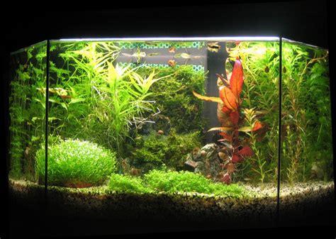 photo d 233 co aquarium eau douce