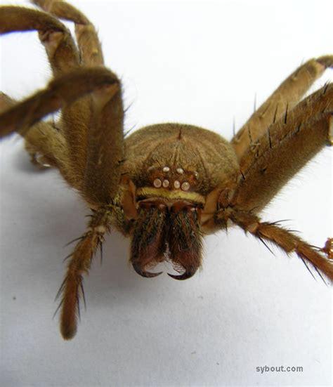 tropical garden animals spiders indonesia