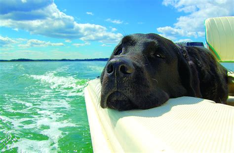 Boat Dog Captions by The Boating Dog S Days Of Summer Boatus Press Room
