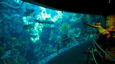 aquarium of the pacific aquarium of the pacific 2017 fish tank maintenance