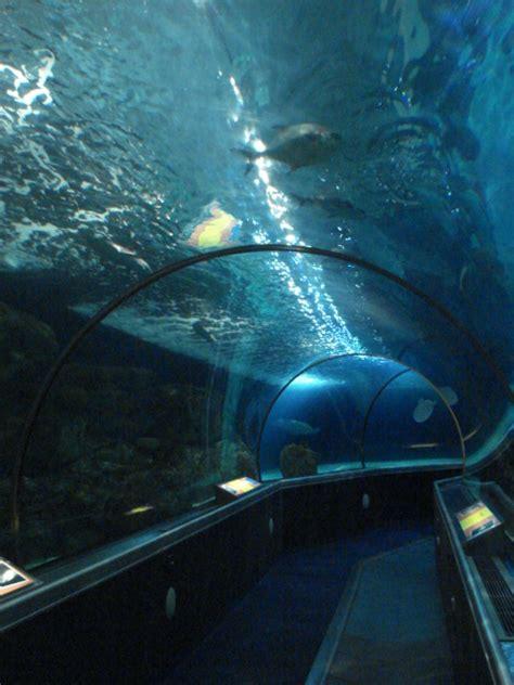 sea minnesota aquarium