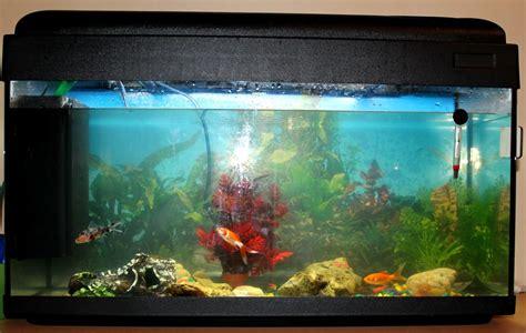 l aquarium le journal de jip 233