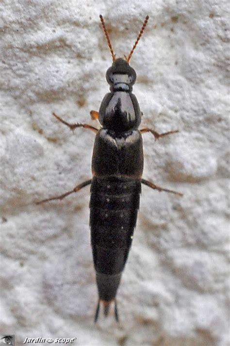 il ressemble 224 une larve d insecte mais n en est pas une le jardinoscope toute la vie