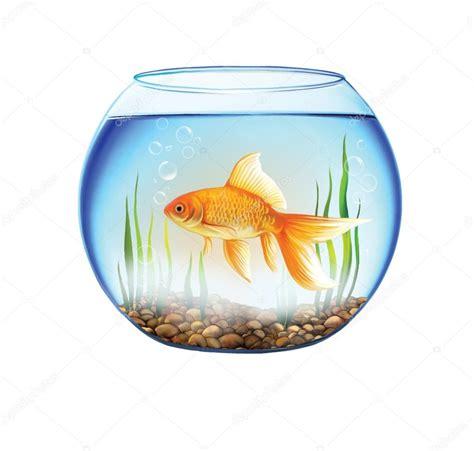 poisson dans un aquarium rond bocal 224 poissons d or photo 24444521