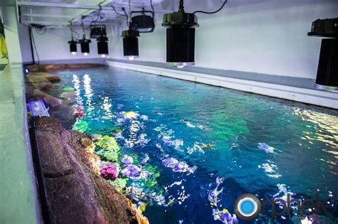 aquariums and fishes fish care led lighting for aquariums