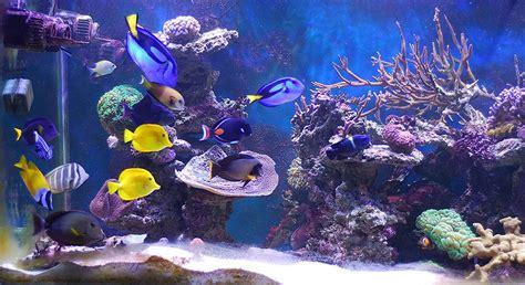 poissons tropicaux et p 234 che au cyanure 183