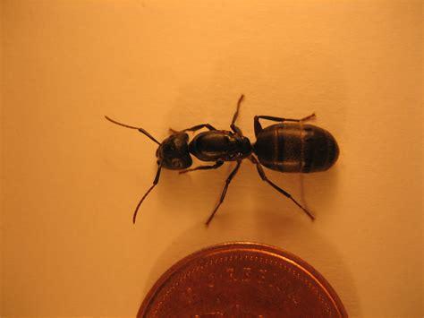 monsieur fourmis