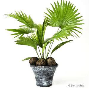 vivre feng shui bordeaux energies des plantes les quot nouvelles quot plantes d int 233 rieur 224 la mode