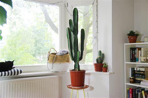 mes plantes cactus mango and salt