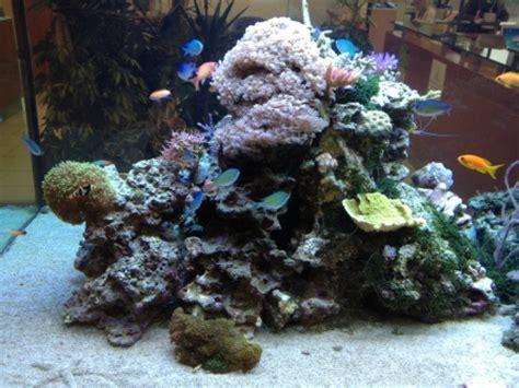 suivi d un aquarium peu ordinaire 200 centim 232 tres de 90 centim 232 tre de large et d une