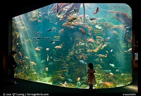 picture photo looks at northern california aquarium