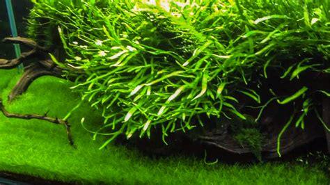 types of aquarium plant fertilizer