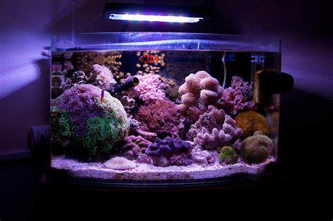 uwwmatt 2012 featured nano reefs featured aquariums monthly featured nano reef aquarium