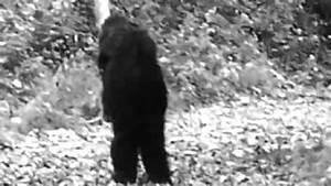 Closer Look - Fulton County trail-cam Bigfoot photo - YouTube