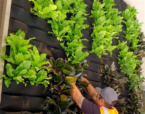 Vertical Gardens & Living Wall Systems
