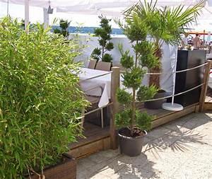 Gräser Kübel Terrasse : pflanzen sichtschutz terrasse k bel genial balkon sichtschutz ~ Markanthonyermac.com Haus und Dekorationen