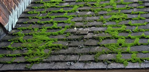 How To Prevent Moss On Roof Tiles Installing Steel Roofing Valleys Supplies Gillingham Kent 16 Foot Metal A Velux Skylight On Flat Roof Certification Las Vegas Certainteed The Collection Warranty Wood Shingle Installation Missing Shingles Insurance